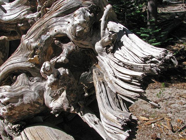 Devils's Postpile National Monument (0516)