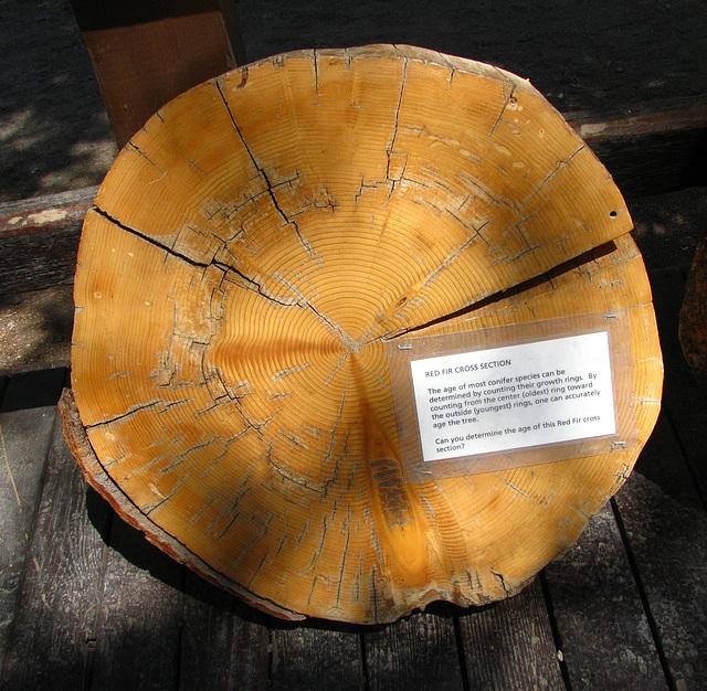 Devils's Postpile National Monument (0540)