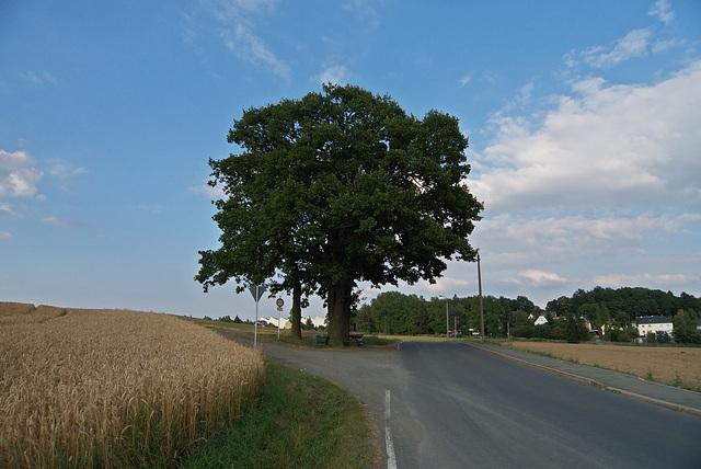 einzeln stehender Baum