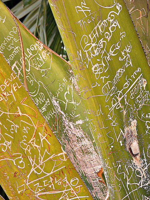 Written on a palm