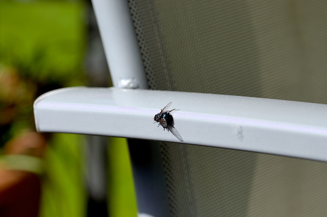 A fly on the chair