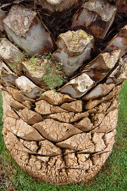 palmstrukturo