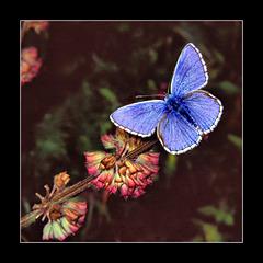 Hi blue one........