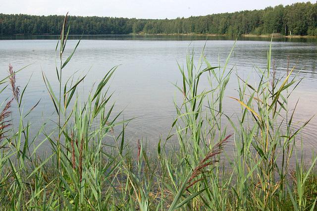 kano, lago