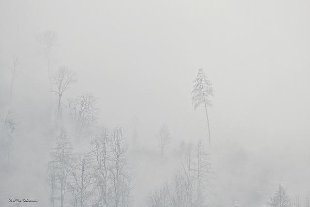 Wenn der Nebel alles verschlingt