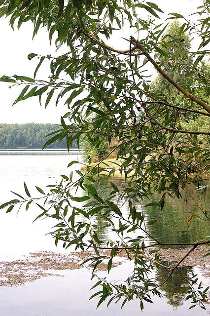folioj, lago