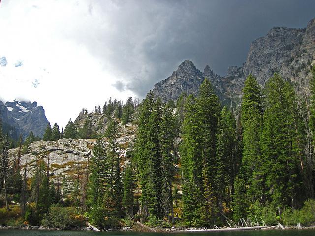 Jenny Lake Shore (0572)