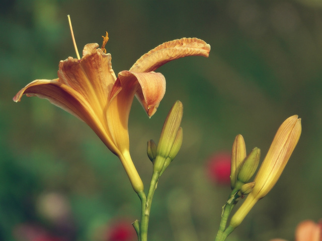 Les fleurs vivent en paix