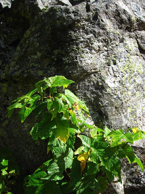 Trail to Hidden Falls (0594)