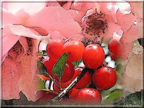 Entre rose et rouge