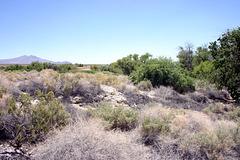 A spring in the desert--