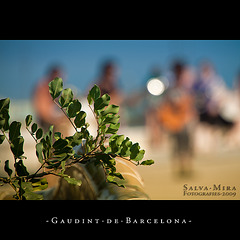 Gaudint de Barcelona [ #10 ]