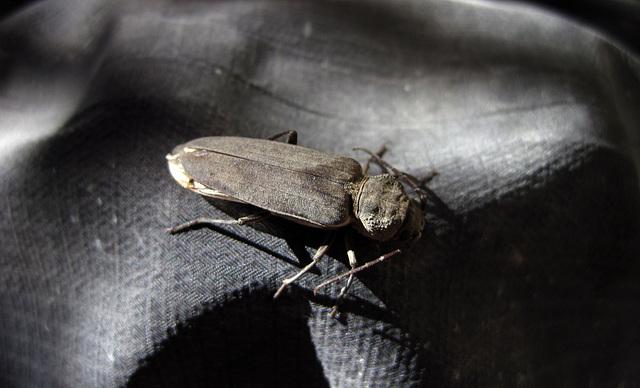 Real Bug (0459)