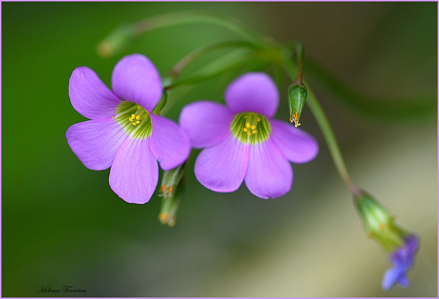 Tiny purple flowers.