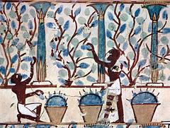 Les Vendanges - Sépulture de Neb Amun