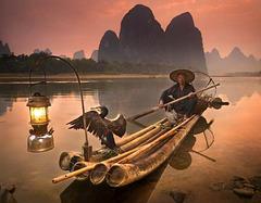 Pêche au Cormoran en Chine