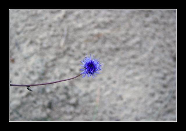 2009-07-02-(07)-web