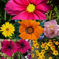 Die schönen Farben des Sommers - les belles couleurs d'l'été - la belaj koloroj de la somero - the beautiful colors of the summer