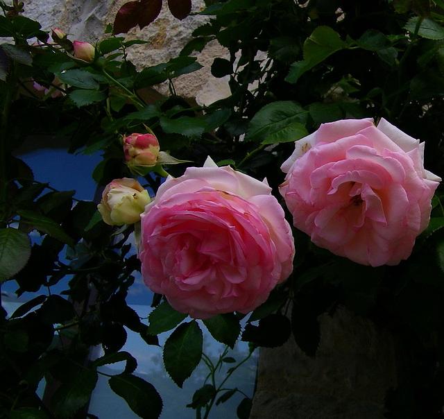 Des roses pour vos yeux