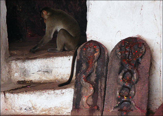 Monkey in the temple