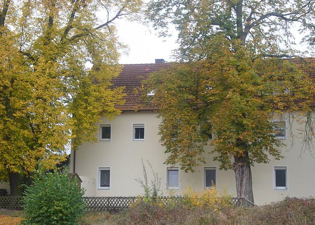 alte Bäume im Herbst