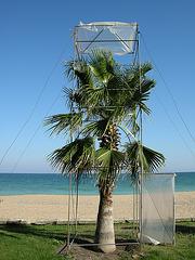 Palme mit Dach und Tür