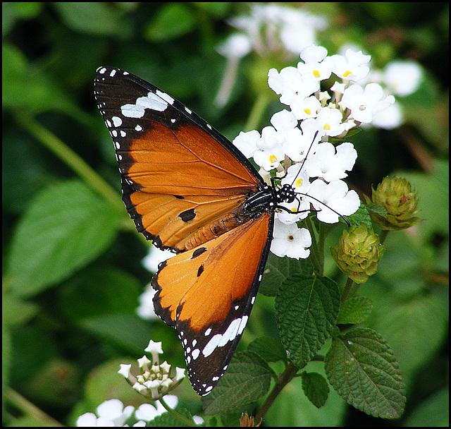 NGMA black white and orange