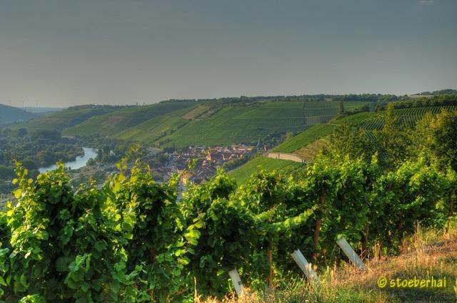 View from vineyard to Randersacker