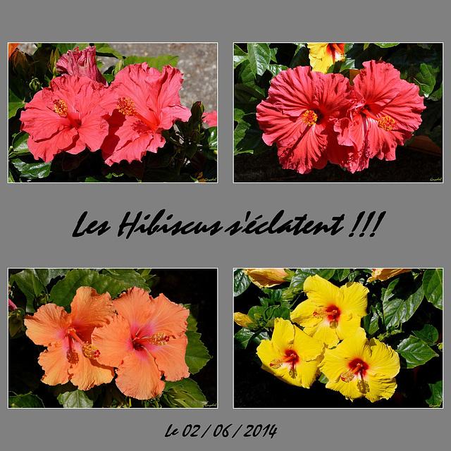 Hibiscus !!!