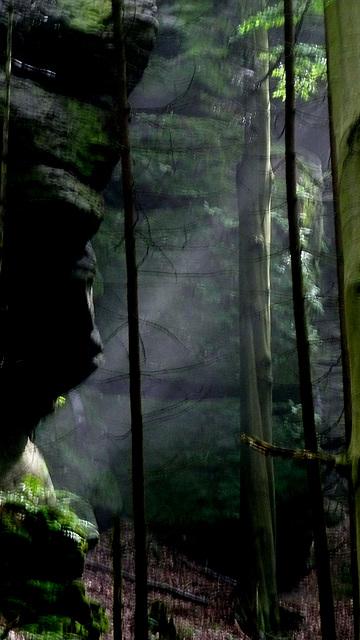 Licht und Stille im Wald