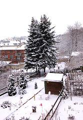 vintra ĝardeno kun abioj - Garten mit Tannen im Winter