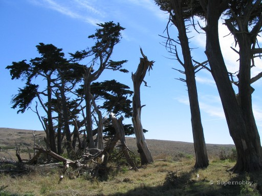 gerupfte Bäume