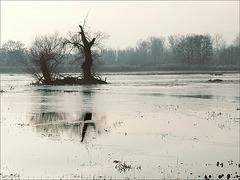 le Ried inondé...et gelé
