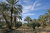 Oasis Date Gardens (2911)