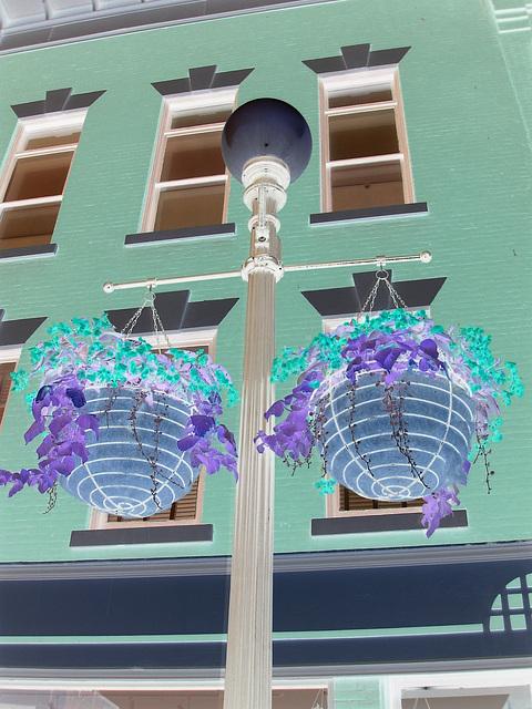 Rutland. Vermont USA - 25-07-2009 - Plants and street lamp /  Plantes et lampadaire. Négatif