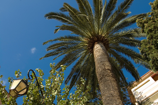 up the palm tree