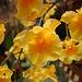20060303 0147DSCw [D-LIP] Orchidee, Bad Salzuflen
