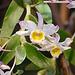 20060303 0148DSCw [D~LIP] Orchidee, Bad Salzuflen: Orchideenschau