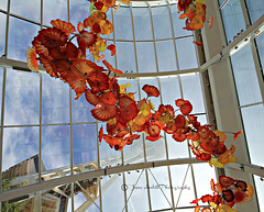 Chihuly Sculptures (16)