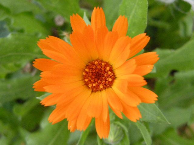 Çiçek... Luludi... Flower...