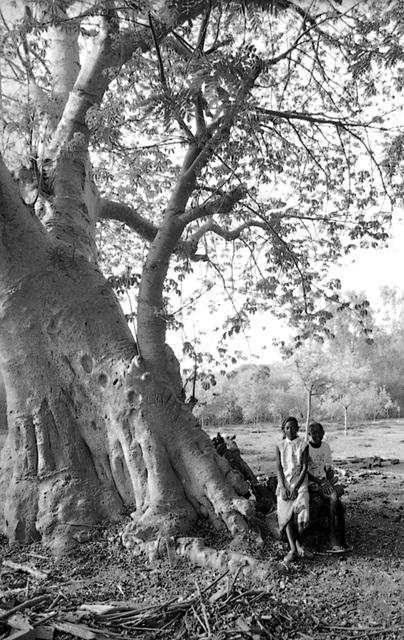 à l'ombre du baobab