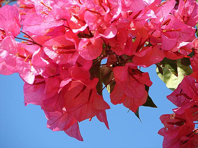 20061101 0863aw Antibes Blume