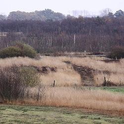 20091105 1081Tw [D~DH] Neustädter Moor