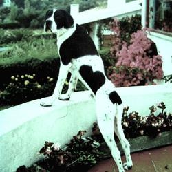 UBIQ, in loving memory of my dog