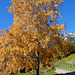 Herbst in Südtirol
