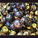 mangosteen cannonballs