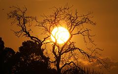Sunrise Squardron Silhouettes