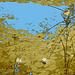 Half moon state park. Sur la 4 près de la 30 nord. Vermont, USA /  États-Unis -   26 juillet  2009 - Sepia et eau bleu photofiltrées.