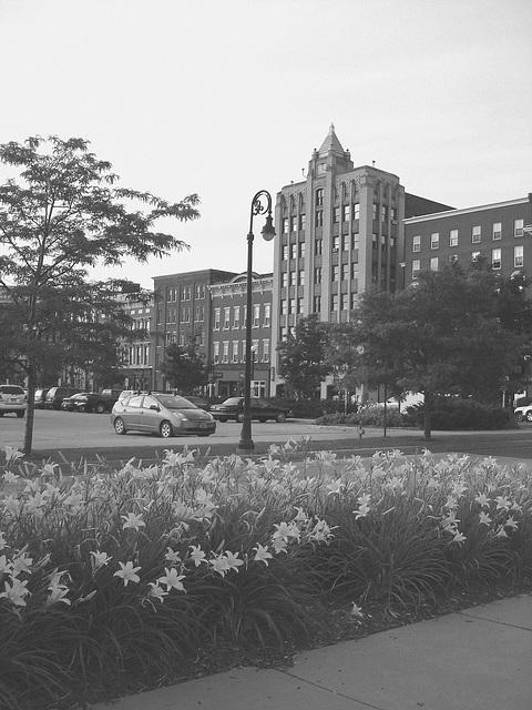 Rutland, Vermont USA / États-Unis - 25 juillet 2009-  Fleurs de ville - Downtown flowers. N & B