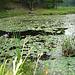 Half moon state park. Sur la 4 près de la 30 nord. Vermont, USA /  États-Unis -   26 juillet  2009-  Photo originale